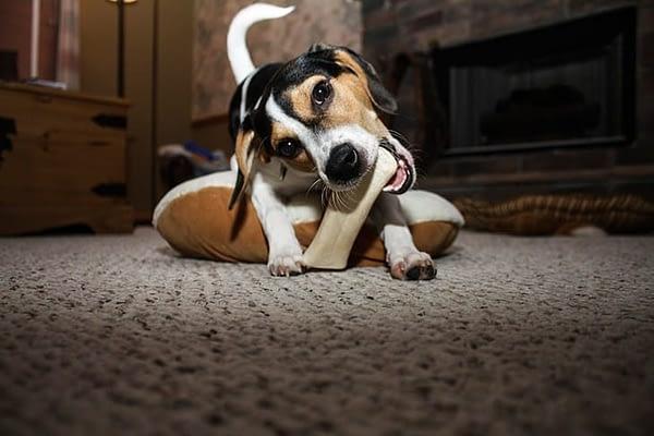 Best Bones For Puppies