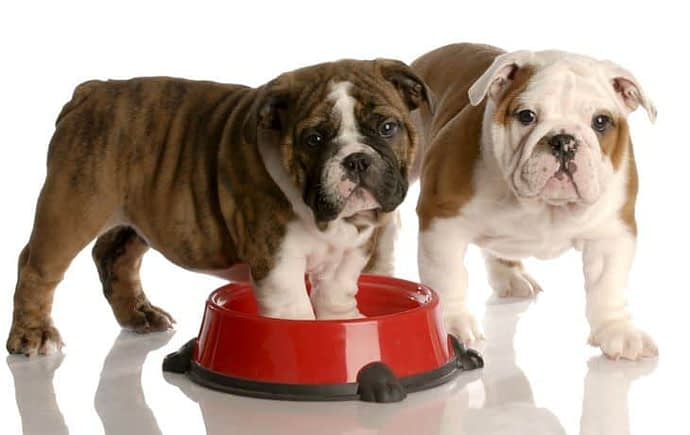 best tasting dog food for picky eaters