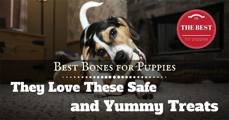 best bone for puppies