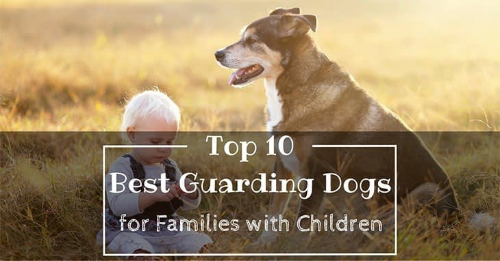 Best Guarding Dogs for Families with Children