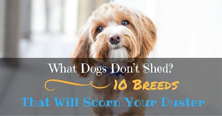 What Dogs Don't Shed