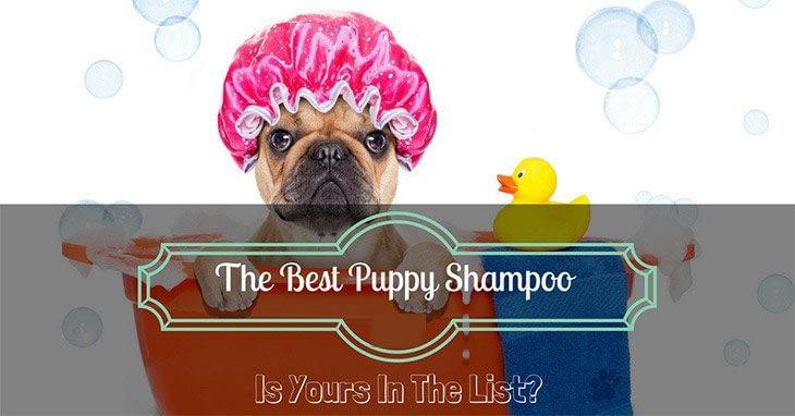 best-puppy-shampoo