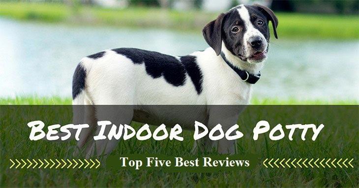 best-indoor-dog-potty