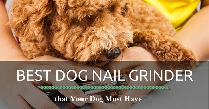 best-dog-nail-grinder