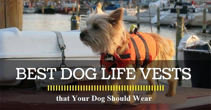 best-dog-life-vest