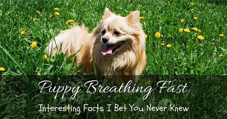 puppy breathing fast