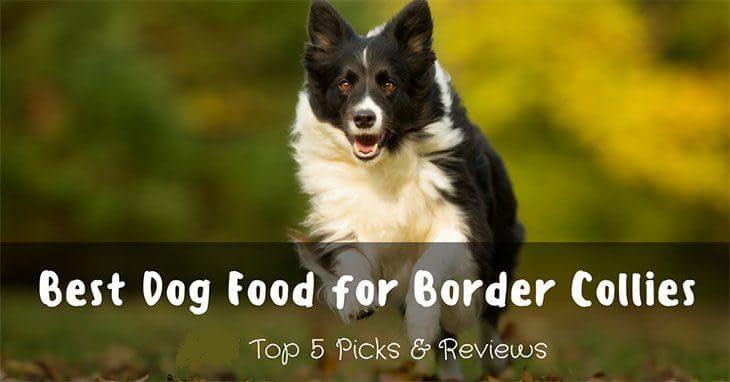 best-dog-food-for-border-collies