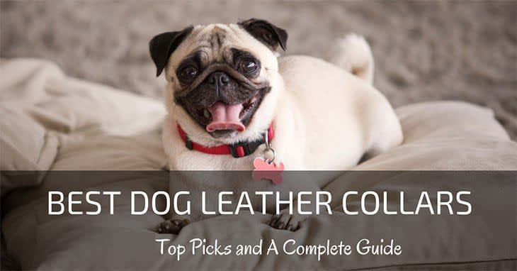 best-dog-leather-collars