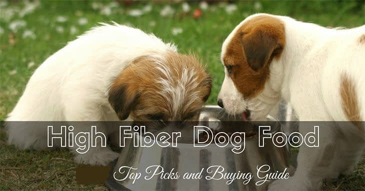 high-fiber-dog-food