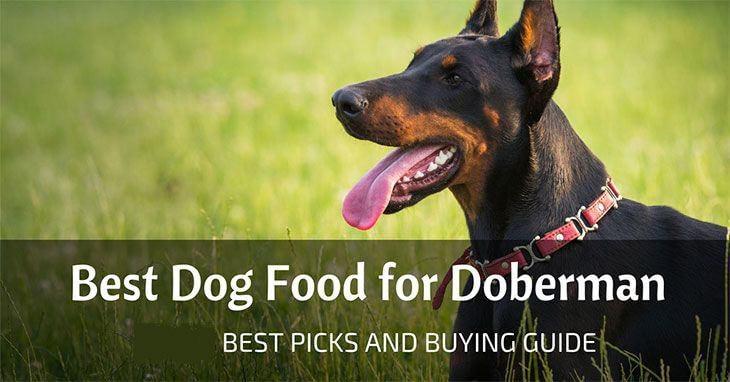 best-dog-food-for-doberman