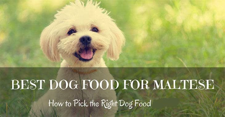 best-dog-food-for-maltese