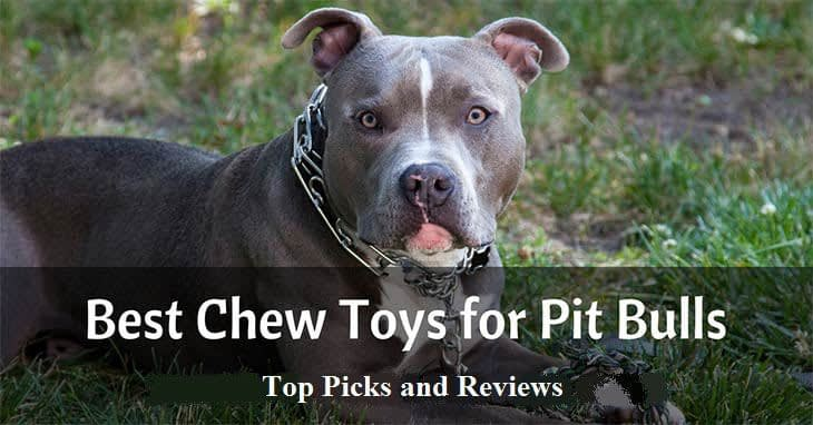 best-chew-toys-for-pitbulls