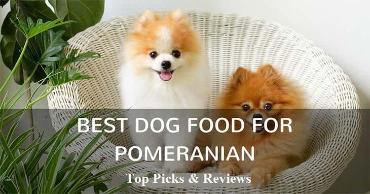 best-dog-food-for-pomeranian