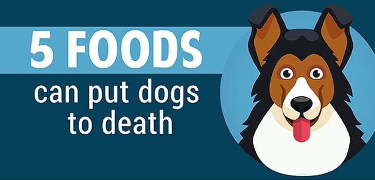5-foods-can-put-dogs-to-death