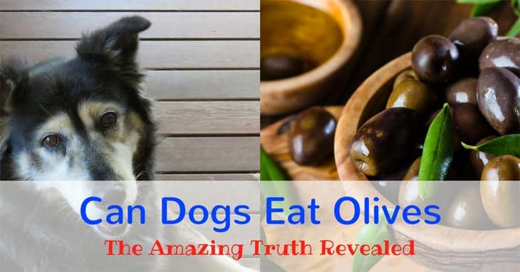 Can-dogs-eat-olives