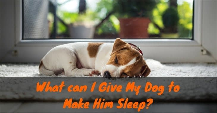 What-can-I-Give-My-Dog-to-Make-Him-Sleep