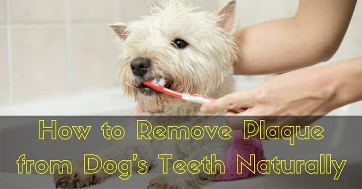 how to remove plaque from dogs teeth naturally