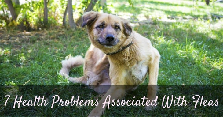 7 Health Problems Associated With Fleas