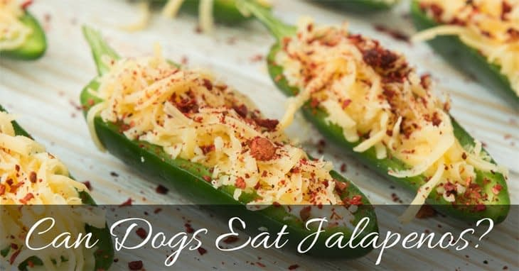 Can-Dogs-Eat-Jalapenos